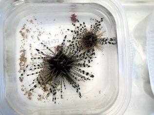 Urchins and other organisms are sorted by species.